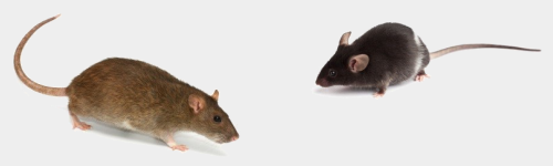 Raticides